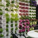10 ideas para hacer tu casa más ecológica