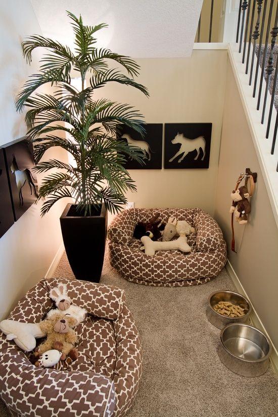 Habitación para tu perro