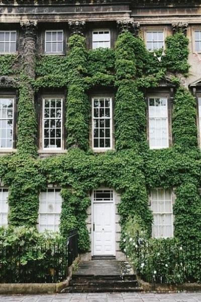 Los edificios urbanos han adoptado la moda de cubrir la fachada de las viviendas con hiedra