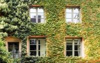 Las hiedras en las fachadas de las casas ha ganado enorme protagonismo con la conciencia sobre lo natural y la eficiencia