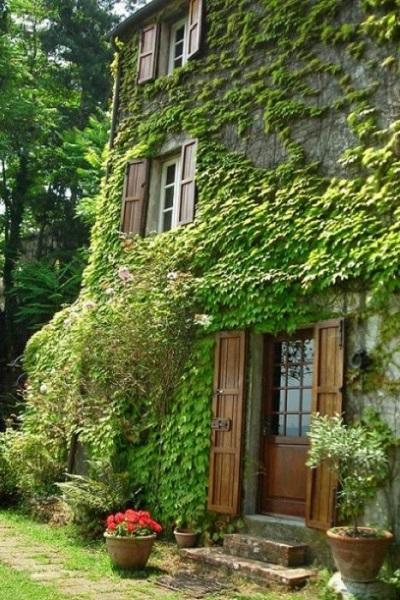 Disponer de hiedras en las casas también tiene una función de herbolario particular
