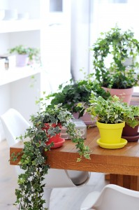 decoracion plantas interior