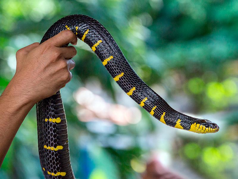 Tenir una serp a casa