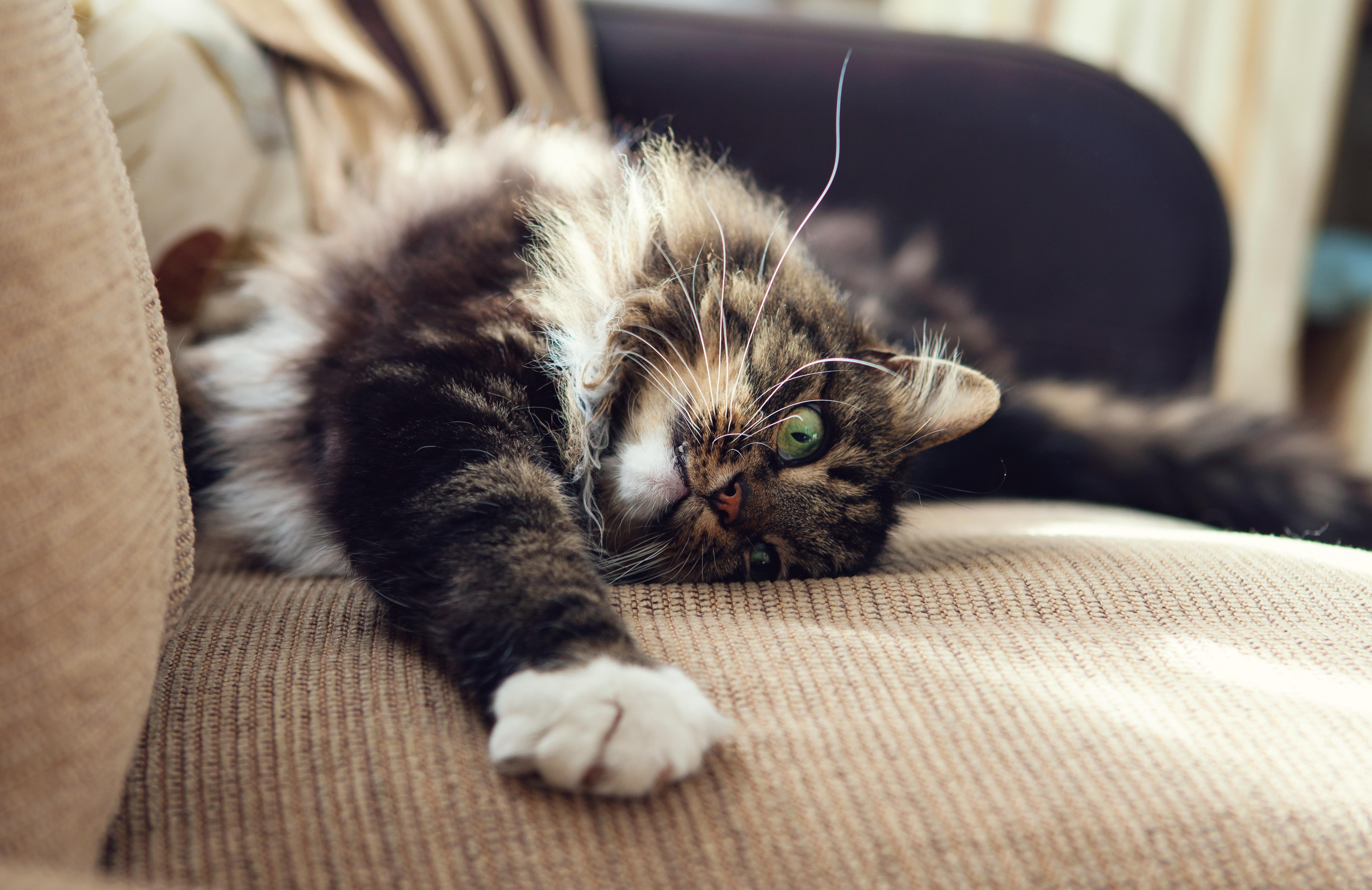 Eliminar pelos de gato