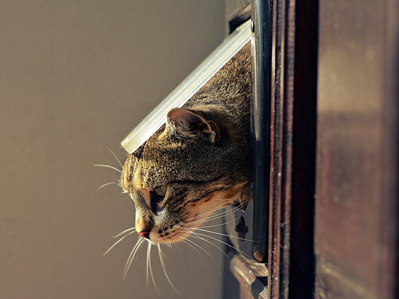 Instalar una puerta gatera