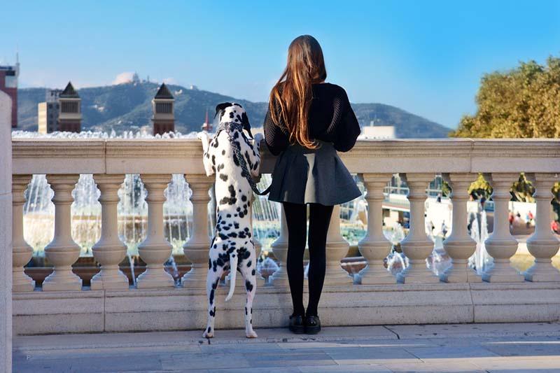 barcelona perros