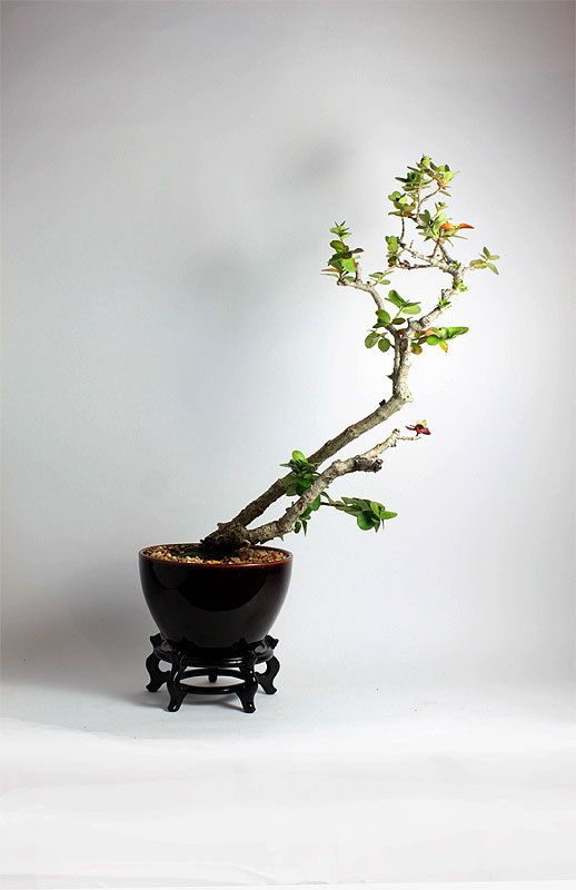 decoració zen bonsai