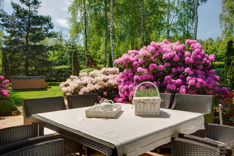 Cuidados básicos para el jardín